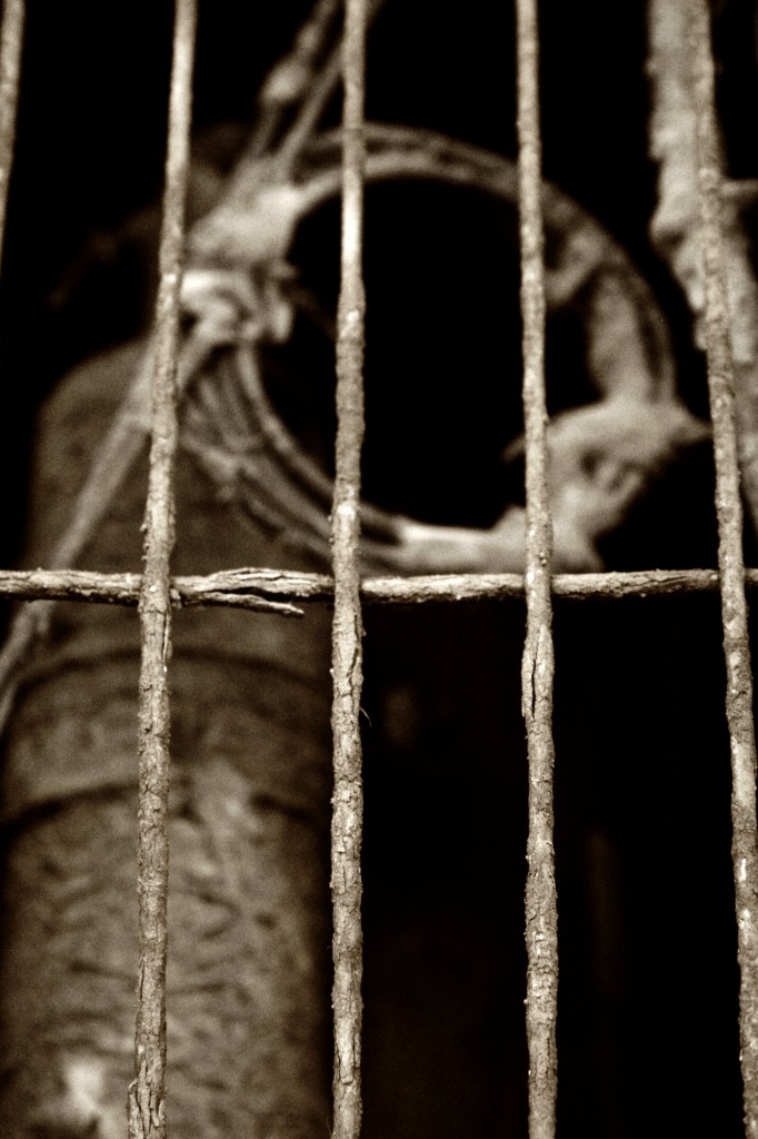 Domestication: A View from Prison, by Brett Stout