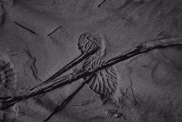 Flotsam framed by footprint by William Crawford. Image courtesy the artist.